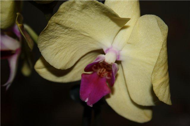 Растения от FILIGERa - Страница 3 5094dc58d472