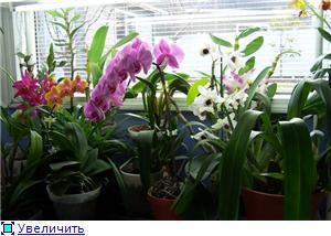 Размещение орхидей 7a95394d9c02t