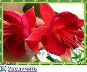 ФУКСИИ В ХАБАРОВСКЕ  - Страница 3 71ffcbe8fc5bt