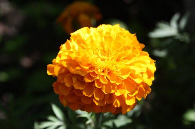 Растения от FILIGERa - Страница 2 C4eb227421e5