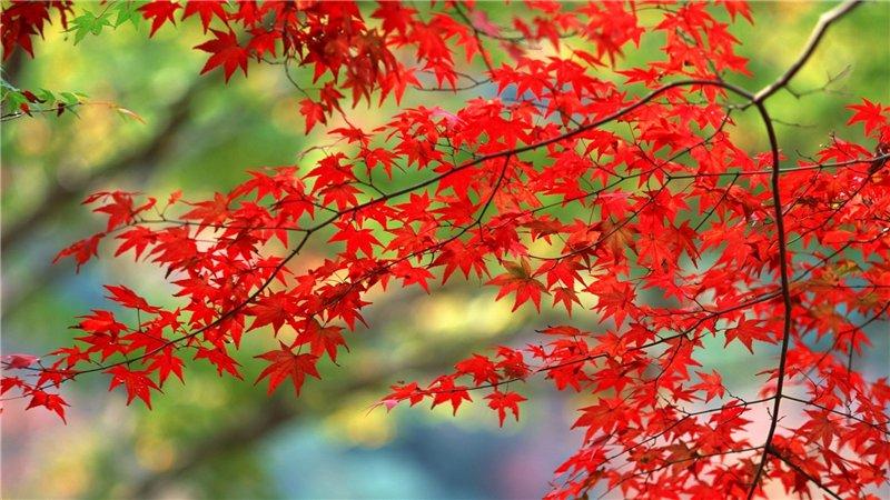 ბუნების ლამაზი ფოტოები 253996986f07