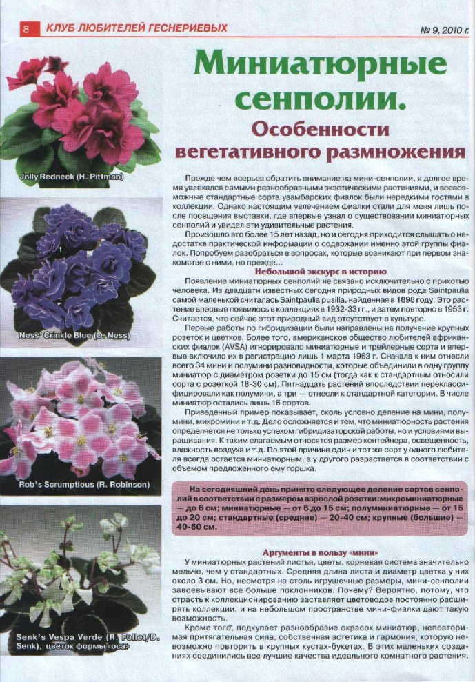 узамбарская фиалка или сенполия D67b11b44a01