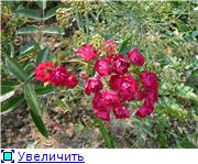 Specially for Karkela )))    Тестирование сербок и проч. A132065361a7t