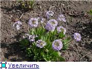Весна идёт... E70a12caedb7t