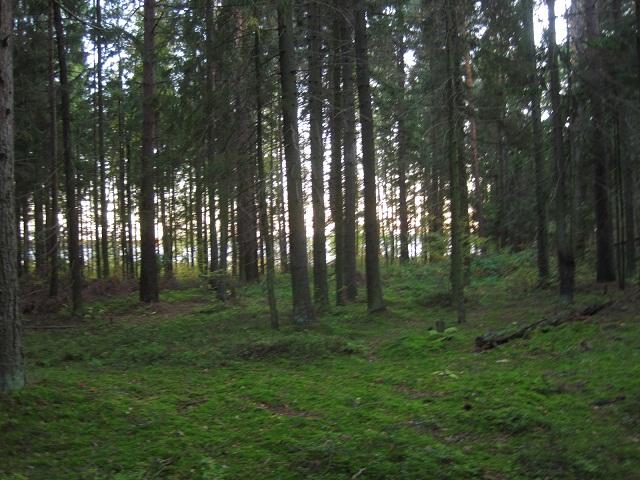 За грибами в Конаково (Тверская область, Волга)! Be93bb764fcb