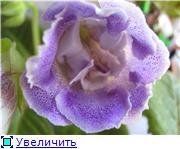 Семена глоксиний и стрептокарпусов почтой - Страница 2 5932f585193at