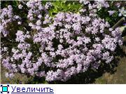 Растения для альпийской горки. 1aee48f8d90et