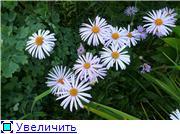 Помогите опознать растение. F51e271783b4t