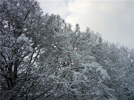 Зимняя сказка на наших фотографиях - Страница 6 Bf35402577d4