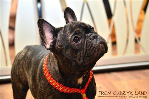 Magic Charm - ошейники, обереги, украшения и аксессуары для собак 55c600c3ecfd