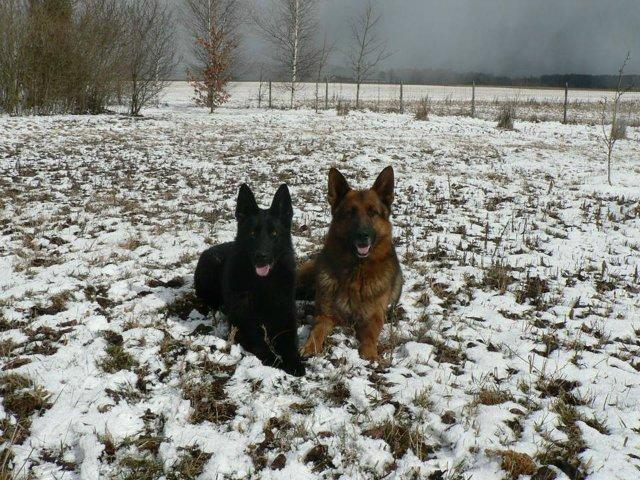 Наши собаки, друзья и гости, кот Мензурка - Страница 30 23c3e0118f00