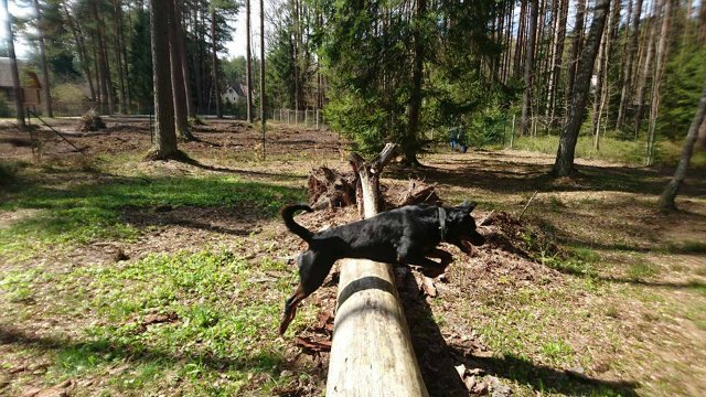 Наши собаки, друзья и гости, кот Мензурка - Страница 30 56afef9f633c