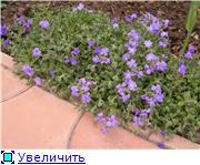 наши домашние цветники - Страница 2 E4ab1bde8877t