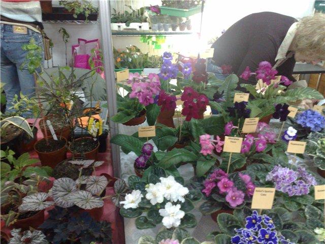 «Цветы.Ландшафт и Приусадебное хозяйство Весна - 2010» 2190506b6672