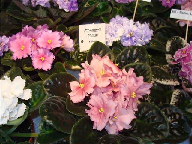 Международая выставка «Цветы.Ландшафт .Усадьба 2010» Астана - Страница 2 810433281485