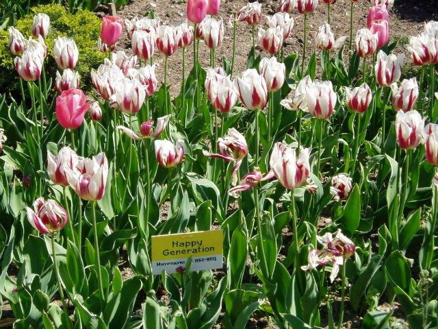 Крым. Никитский ботанический сад. 3215fa1b3c97