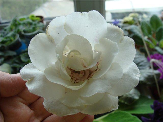Весеннее  цветение (Хваст от Веры) - Страница 5 647d4ba26c73
