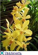 Парк орхидей в Ботаническом саду Сингапура. 64ece12c89d4t