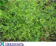 Помогите опознать растение. C6d3a2bc0645t