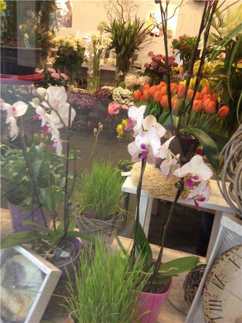 Выставка цветов - Страница 2 3ca039f547c2