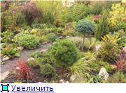 Cад Людмилы Ивановой из черкасс 5af103a6abb1t