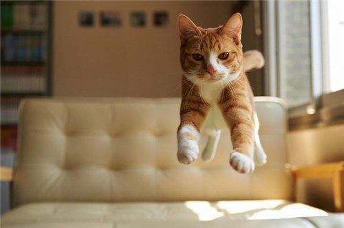 Сама по себе гулёна (о кошках) - Страница 2 C52a8adeb145