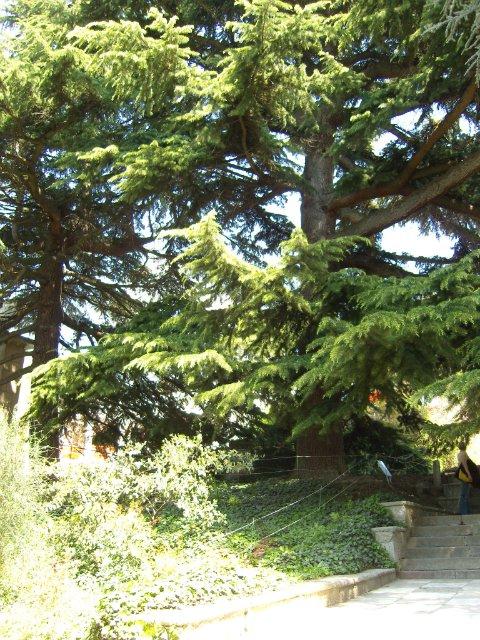 Крым. Никитский ботанический сад. Df39ee4ed0c8