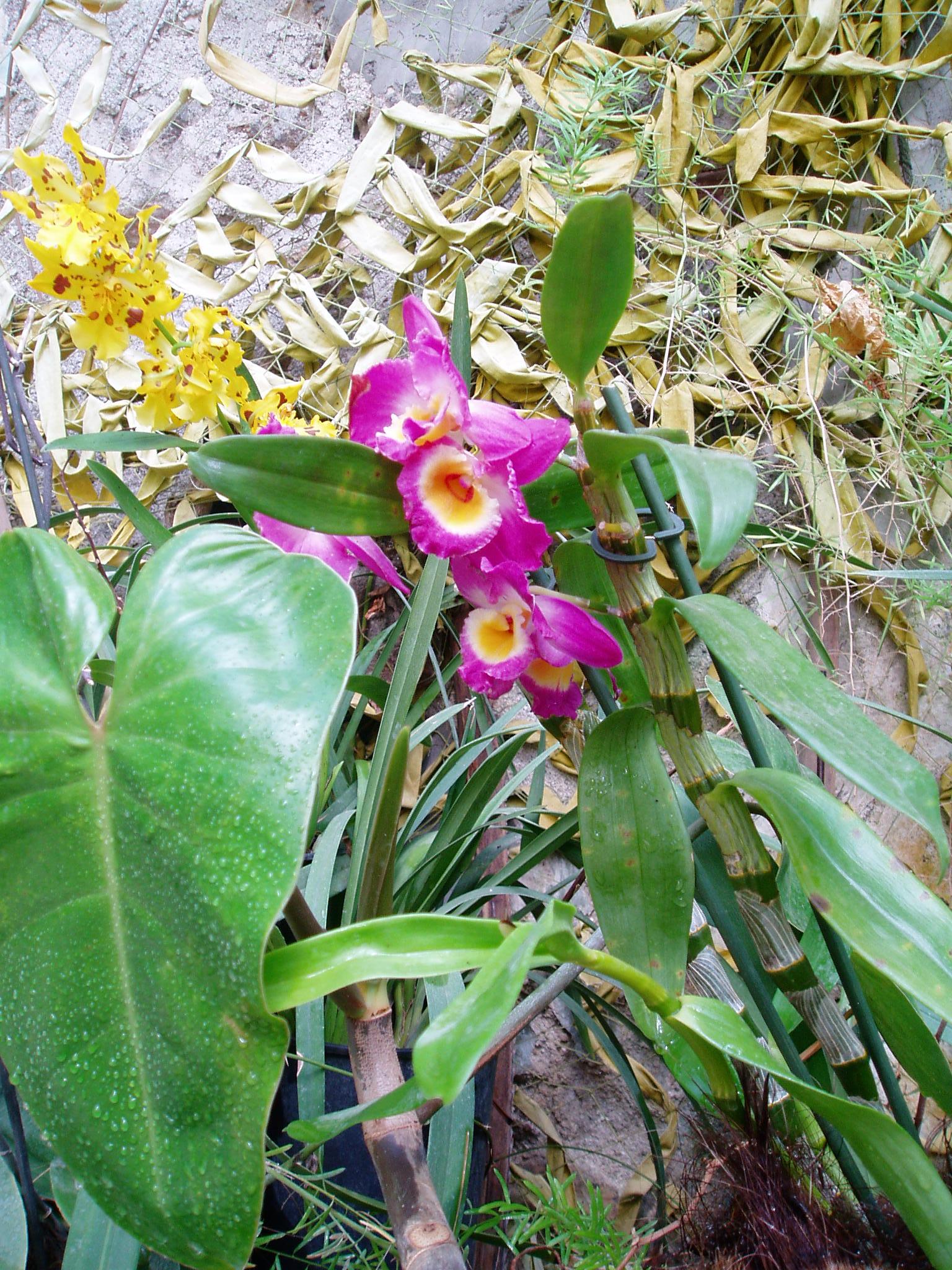 Выставка Орхидей 433614712762