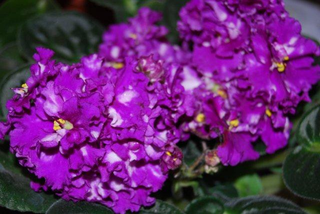Международая выставка «Цветы.Ландшафт .Усадьба 2010» Астана - Страница 3 Dc7526d3ffb1