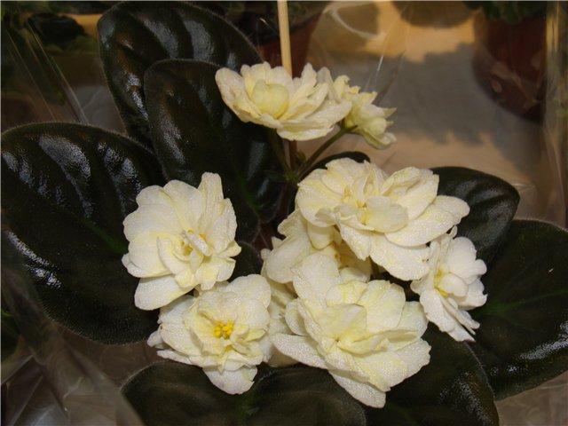 Международая выставка «Цветы.Ландшафт .Усадьба 2010» Астана - Страница 2 7a01998abd38