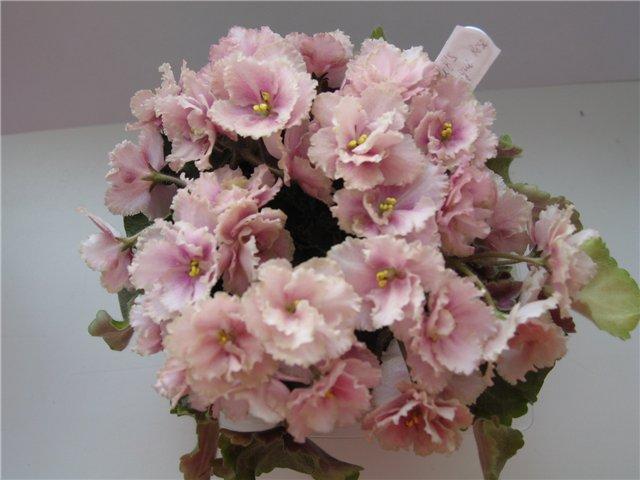 Мои цветики-семицветики 127c9f94c51e