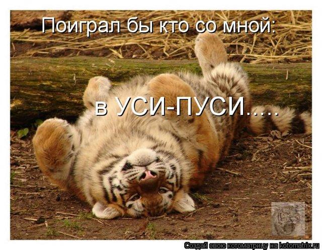 Забавные животные 0b10e6a313c6