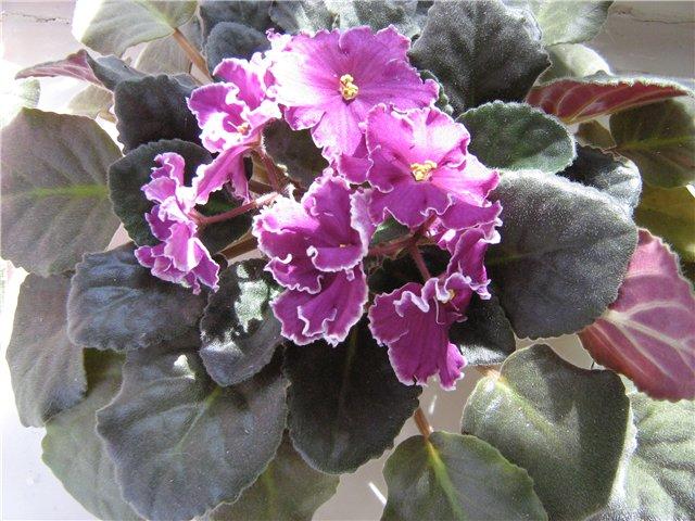 Моё цветочное богатство E70364b2cd29