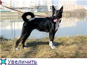 Чара - потрясающая собака! Ищет лучших хозяев! Eb694916e682t