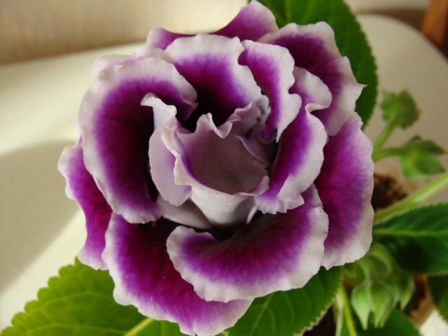 Мои цветочки - Страница 13 9ae5d79dc56b