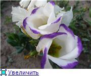 Хвасталка, у кого чего выросло интересного ;)  D5f5116b4fa9t