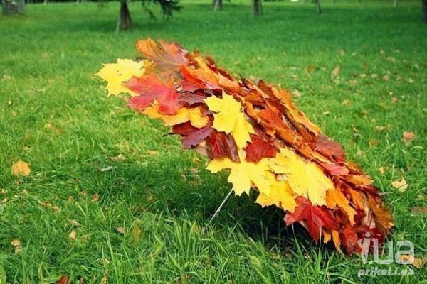 Осень, ты на грусть мою похожа... (с) - Страница 4 828093