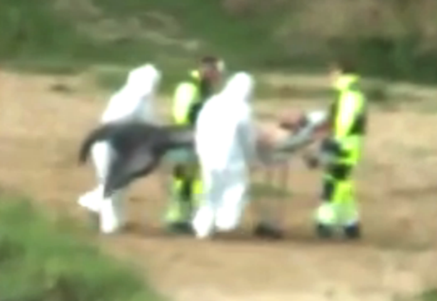 Bio Hazard Team Caught Removing Alien Creature, UFO Sightings Merman-grab
