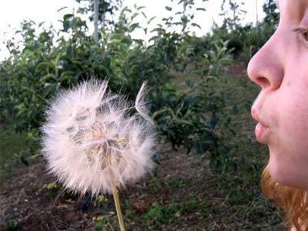 11:11:2010 - INTERRUPÇÃO - ATÉ BREVE !    - Página 3 Flor-amanky-g-20100519