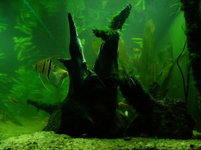 6º Concurso AquaPeixes de Fotografias -Reflexo- - Página 2 Aquanov201012
