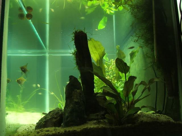 concurso - 2º Concurso AquaPeixes de Fotografias -Aquário Comunitário- Outubro201023