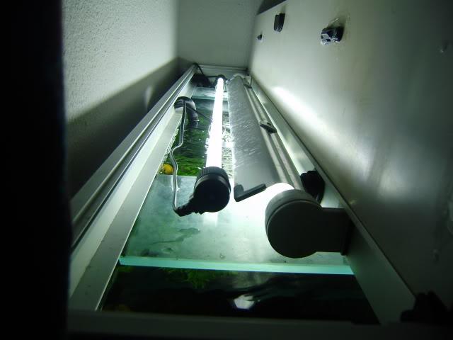 Aquatlantis 240 litres l'histoire continnue... - Page 7 PA170011