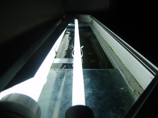 Aquatlantis 240 litres l'histoire continnue... - Page 7 PA170012