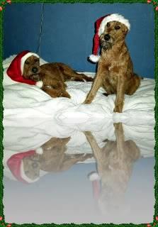 hunder og venner Nissepar2