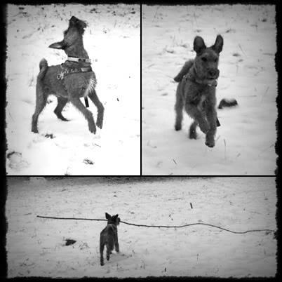 Vinterbilder av din hund! VinterhundenPeico