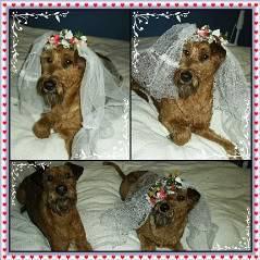 hunder og venner Brudebilder