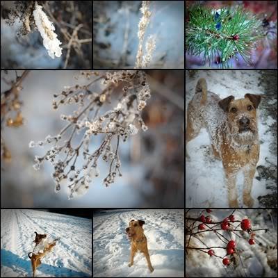 Peicos bilder Vinter3