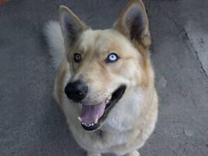 Wuff Like A Dog(Stray dogs)Semlit Accepting MixedDog