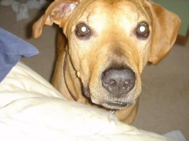My dogs Dogtread2