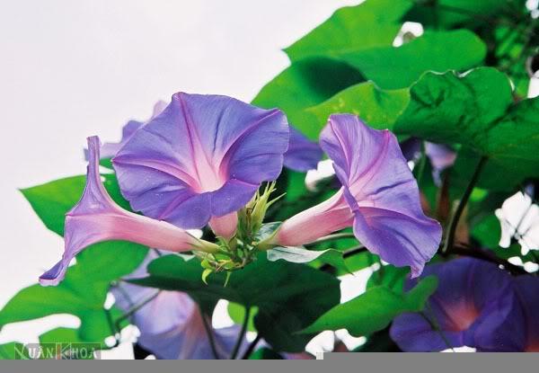 Mỗi tháng tượng trưng cho một loài hoa Hoabimbip